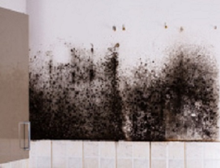 mold-in-kitchen